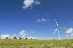 Vacas que pastan al lado de una turbina de viento Foto de archivo libre de regalías