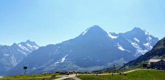 Vacas que pastan arriba en las montañas imagen de archivo