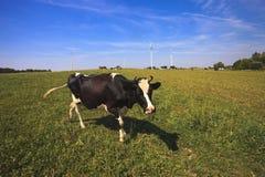 Vacas que pastan cerca de las turbinas de viento Imagen de archivo libre de regalías