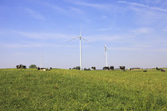 Vacas que pastan cerca de las turbinas de viento Fotos de archivo libres de regalías