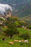 Vacas que pastan delante del pueblo de Torla en Huesca Imágenes de archivo libres de regalías