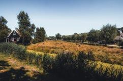Vacas que pastan en pequeños pastos en los Países Bajos imagen de archivo
