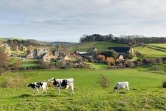 Vacas que pastan y granero de diezmo en el pueblo de Dorset de Abbotsbury Inglaterra Reino Unido Imagen de archivo libre de regalías