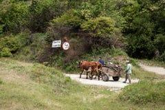 Vacas que tiran de un carro con madera Imágenes de archivo libres de regalías