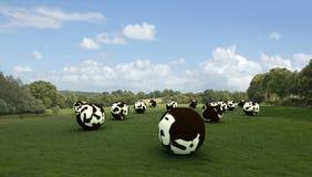 Vacas Spheric Imagem de Stock Royalty Free