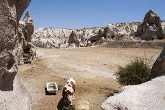 Vacas y cuevas en Cappadocia Fotografía de archivo libre de regalías