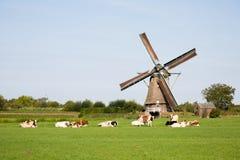 Vacas y molino de viento Imagenes de archivo