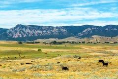 Vacas y montañas imagenes de archivo