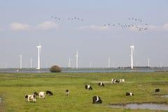 Vacas y turbinas de viento cerca de Spakenburg en Holanda Imágenes de archivo libres de regalías
