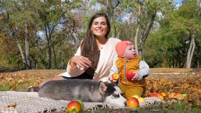 Vacation in autumn park, mother with son and pet sit on yellow fallen leaves with apples. Vacation in autumn park, mother with her son and pet sit on yellow stock video
