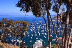 Vacation at Catalina Island. A view of marina and open ocean from a hill on a sunny weekend afternoon at Catalina island Royalty Free Stock Photo