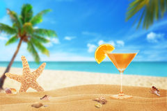 Vacation with a cocktail on the beach. Cocktail, starfish and shells on the beach palm and sea in the background Stock Photos
