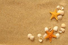 Vacation concept. Vacation memories from the beach, seafish and shell Stock Photography