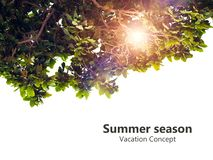 Vacation Concept, Summer season concept, green leaf isolated on white background with copy space