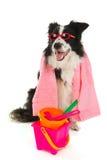 Vacation dog Royalty Free Stock Image
