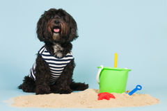 Vacation for the dog Royalty Free Stock Photography