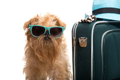 Vacation for dog Stock Photo