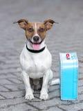 Vacation dog Royalty Free Stock Photography