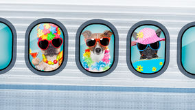 Vacation dogs in airplane Royalty Free Stock Photography