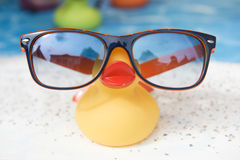 Vacation duck Stock Image
