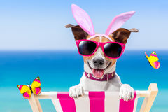 Vacation easter dog Stock Photography