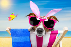 Vacation easter dog Stock Image