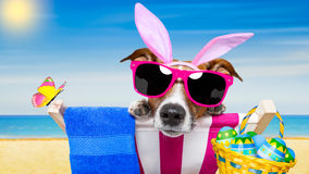 Vacation easter dog Stock Photos