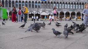 Vacation in Europe, tourists walking around the square San Marco with pigeons. Venice, Italy 19 May 2018: vacation in Europe, tourists walking around the square stock footage