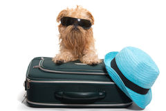 Vacation For Dog Stock Photography