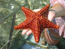 Vacation moments. Beach item.Starfish in a hand Royalty Free Stock Photo