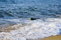 Soft wave hitting sandy beach under bright sunny day Stock Photography