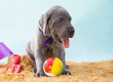 Vacation puppy Royalty Free Stock Photos