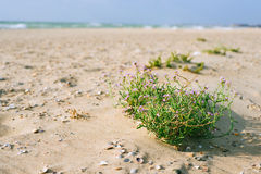 Vacation by the sea. Sandy coast and bush flowers Stock Photo