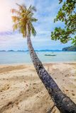 Vacation Tropical sandy beach with palm and turquoise sea. stock images