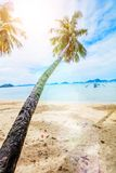 Vacation Tropical sandy beach with palm and turquoise sea. royalty free stock image