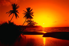 Vacation is in tropics Royalty Free Stock Photography