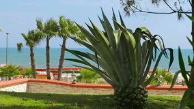 Vacation in Turkey. Nice view on ocean, aloe and palm trees. Hot summer beautiful day stock footage