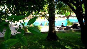 Vacationers in the pool. The view from the shade of tropical trees. Hot dry weather stock footage