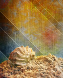 Vacations. Grunge background with shell. Paper texture Royalty Free Stock Photography