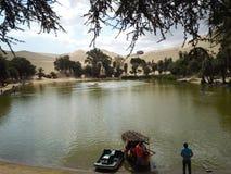 Vaccachina Perú Foto de archivo libre de regalías