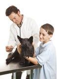 Vaccination donnante vétérinaire Images libres de droits