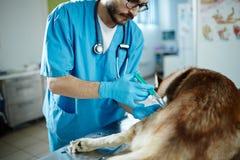 Vaccinering av hunden royaltyfri fotografi
