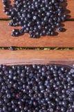 Vaccinium myrtillus blueberries Stock Photo