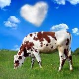 Vache à Brown photo libre de droits