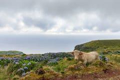 Vache à Flores image libre de droits