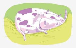 Vache à sommeil Images libres de droits