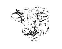 Vache à tête de croquis de vecteur Image libre de droits