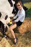 Vache à traite de femme Photo stock