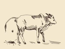 Vache à zébu de dessin de main illustration libre de droits