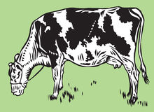 Vache Photos libres de droits